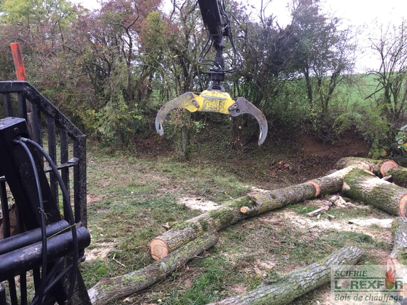 Quand couper les arbres pour bois de chauffage - Arbre fruitier comme bois de chauffage ...